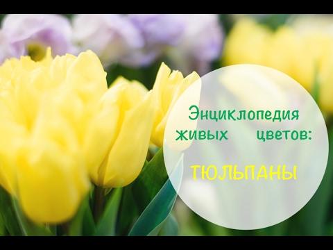 Энциклопедия живых цветов: Тюльпаны