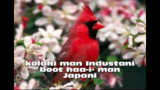 kolhi man Industani boot haa-i- man Japani