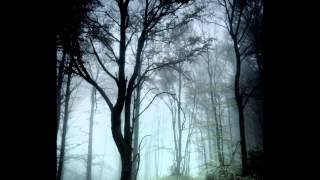 Forest of Shadows - Wish