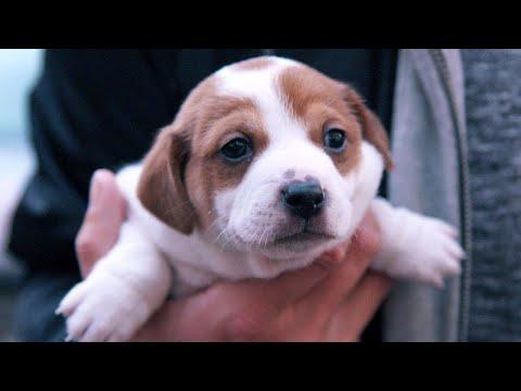 Per Mausklick Zum Welpen: Das Geschäft Mit Der Ware Hund (SPIEGEL TV Für ARTE Re:)