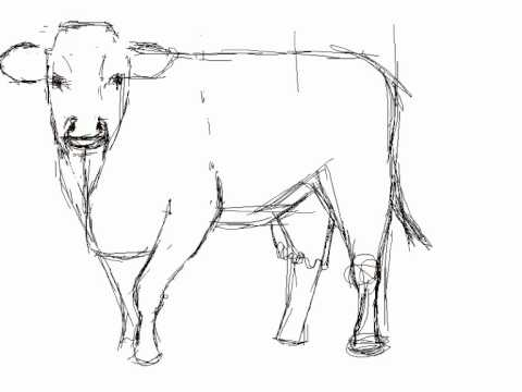 Cómo dibujar una vaca - How to draw a cow - YouTube