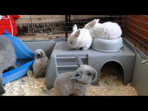 Сколько живут карликовые кролики в домашних условиях