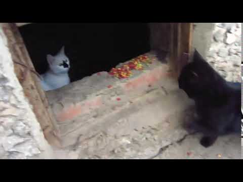 Scared cats jumping from basement9