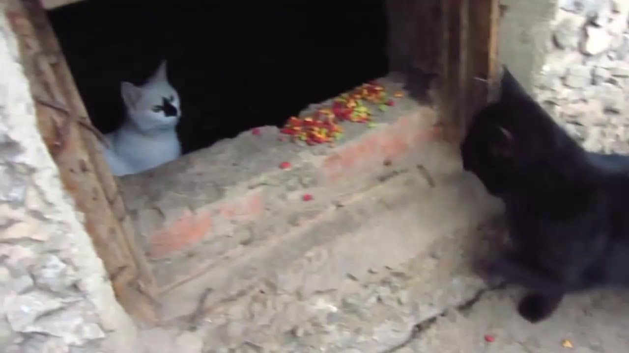Scared cats jumping from basement9 - YouTube