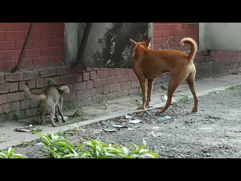 CAT & DOG FIGHT