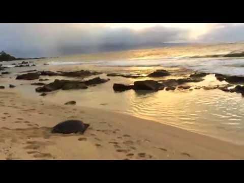 ram dass sings hanuman chalisa - kirtan - words/translation - and turtle swims maui tide pools