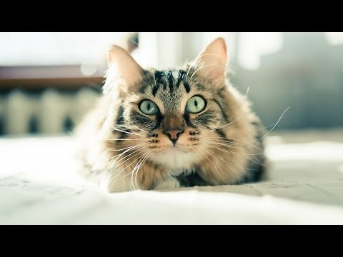How to Train a Cat to Come When Called | Cat Care