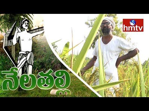 Ideal Farmer Vijay Ram Shares Organic Farming Tips   Nela Talli   hmtv