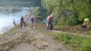 30 тонн толстолобика смыло после открытия шлюзов на Черепетской ГРЭС