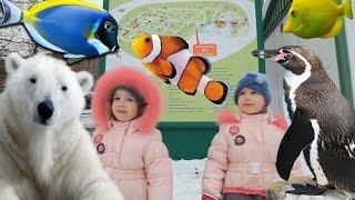 ВЛОГ Идем в ЗООПАРК Роев ручей Красноярск Животные океанариум террариум Развлечения для детей