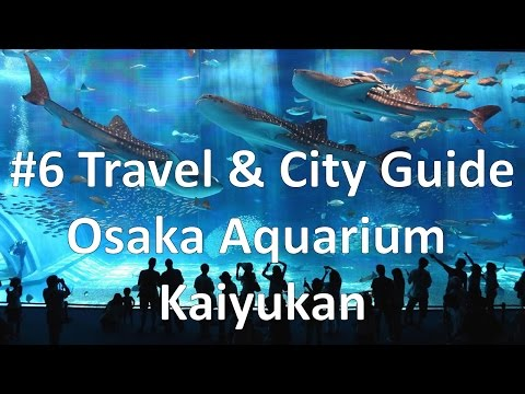 Episode 6 - Osaka Aquarium Kaiyukan (Travel & City Guide)