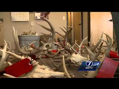2 Cass County hunters face hundreds of citations