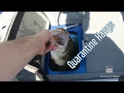 Lake Of The Ozarks Bass Fishing Pandemic