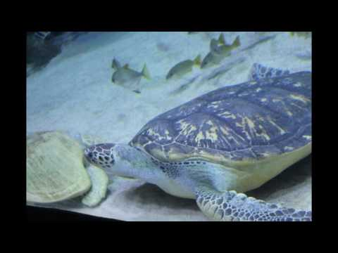 #Aquaria KLCC | Malaysia | An Awesome Experience of Underwater World |