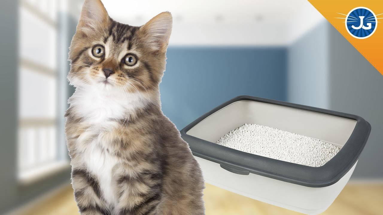 Why Does My Cat Pee Outside The Litter Box?   YouTube