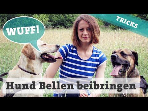 Hunde Bellen auf Kommando | Hund Gib laut beibringen | Hundetricks