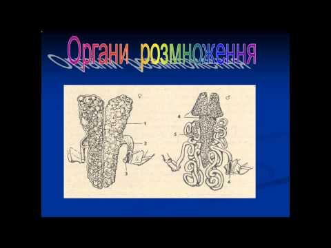 Презентація Ракоподібні