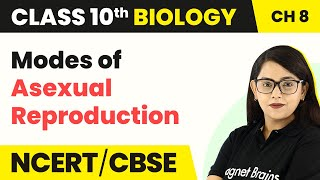 Asexual Reproduction | How Do Organisms Reproduce? | Class 10 Biology