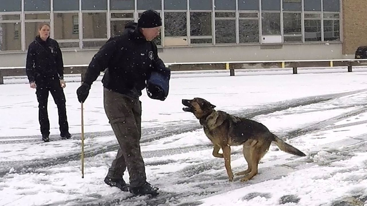 how to train your dog to be a police dog