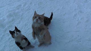 Прикольные голодные кошаки, пос. Гастелово. 23-24 января 2016г.