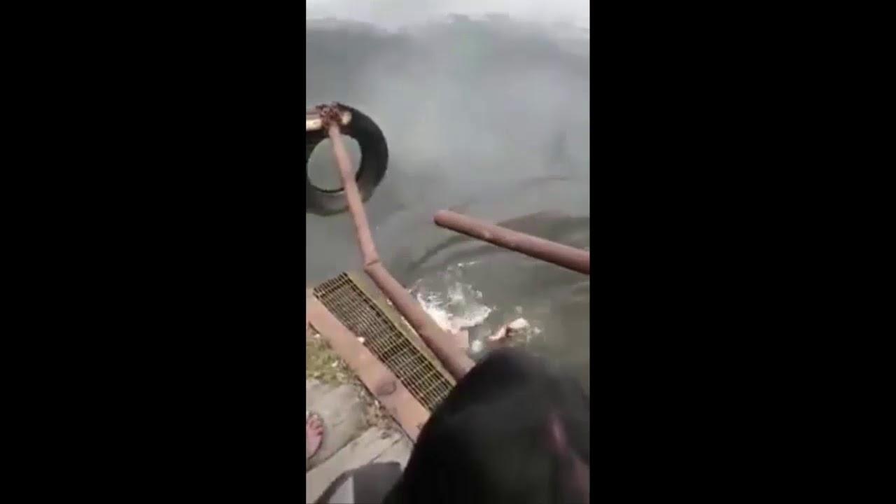 Shaman Killed by Crocodile