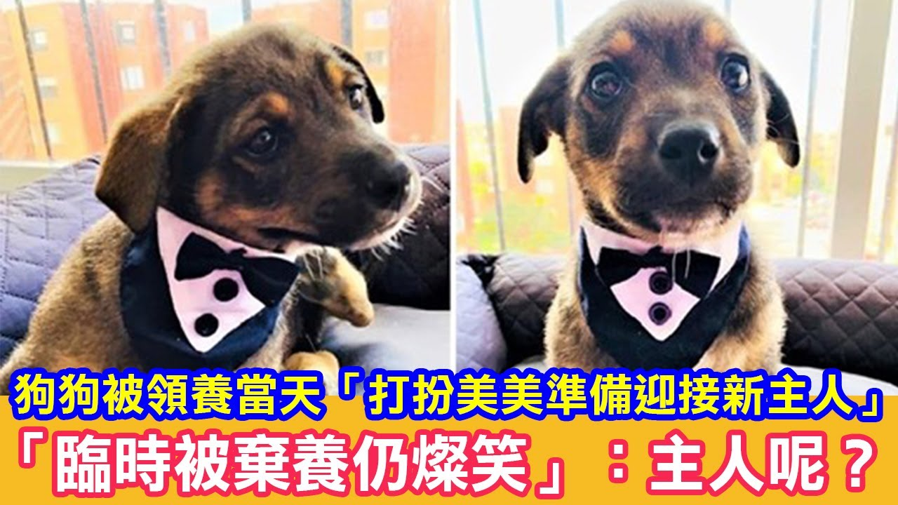 狗狗被領養當天「打扮美美準備迎接新主人」「臨時被棄養仍燦笑」:主人呢?|狗狗故事