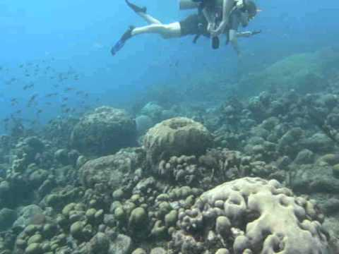 diving with Twin Divers at Marie Pampoen - Curacao (December 2012)