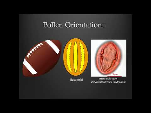 Pollen Morphology Training - Part 1: Shapes And Orientations