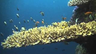 eReefs: Providing water quality information for the Great Barrier Reef (30 seconds)