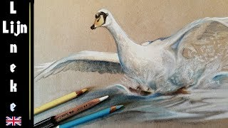 How to draw a Swan landing on water - Pastel Pencil drawing