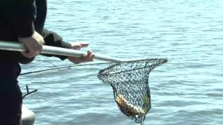 XTV- Louisiana crappie finds the net