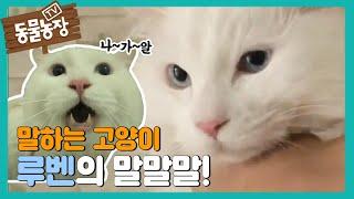 말하는 고양이 루벤! I TV동물농장 (Animal F…