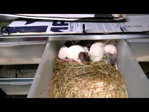 Freedom Breeder rodent racks