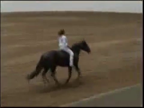 Amazing Horse Ride!