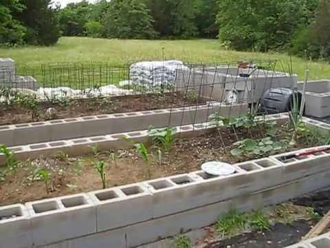 Cinder Block Raised Bed Organic Garden 5 31 13 Youtube