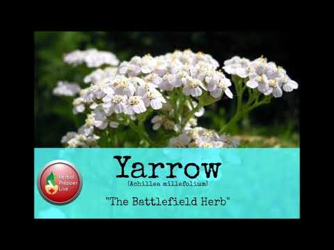 Yarrow, The Battlefield Herb, aired 1-14-18