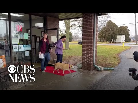 Bama, Rob & Heather - C'mon Get Happy: Dog At Shelter Longer than Employees Gets Family!!