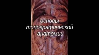 """Учебный фильм """"УЗ-диагностика в ветеринарной медицине"""""""