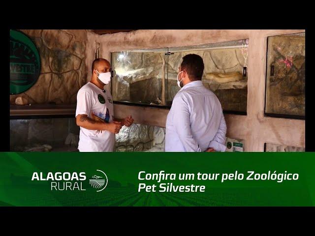 Confira um tour pelo Zoológico Pet Silvestre