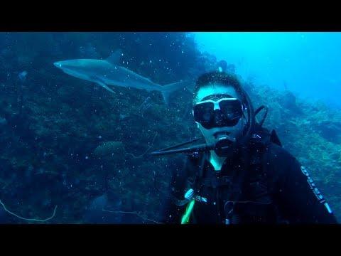 Old Providence Deep Diving - The Spiral - Blacktip Reef Shark