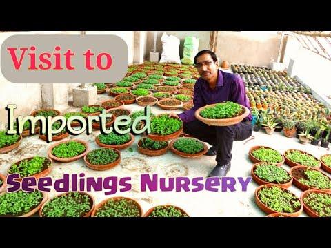 Visit To The Best Imported Seeds Seedlings Nursery In Kolkata.