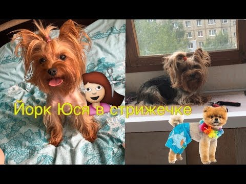 DOGVLOG:у Юси новая стрижка,Маркус похудел,болтовлог.мои собаки