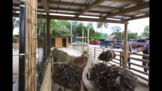 Seminole Indian Reservation Shop Ride