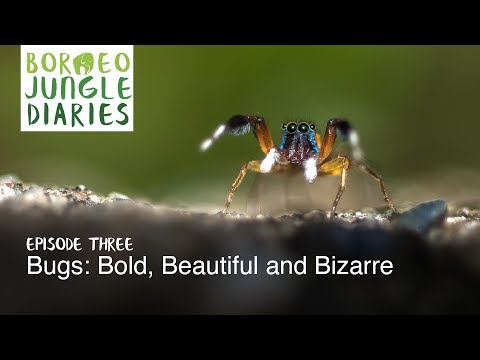 Borneo Jungle Diaries: Episode Three - Bugs: Bold, Beautiful and Bizarre [UHD/4K] SZtv