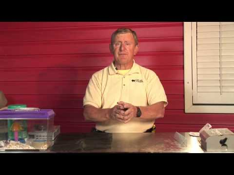 Pest Control How To Get Rid Of Bats