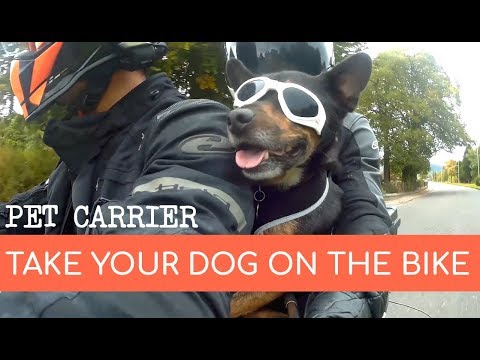 Affordable Motorcycle Pet Carrier For Dogs - YouTube
