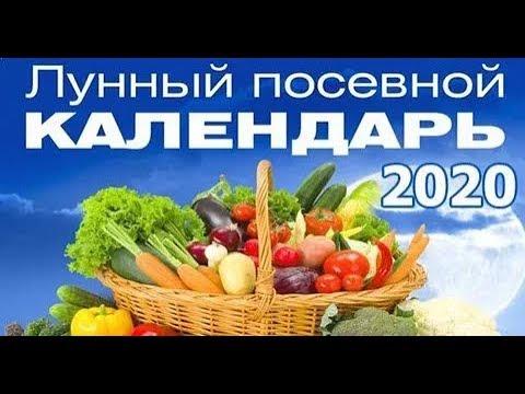 Лунный посевной календарь огородника на 2020 год | огородника | календарь | посевной | лунный | на_2020 | год