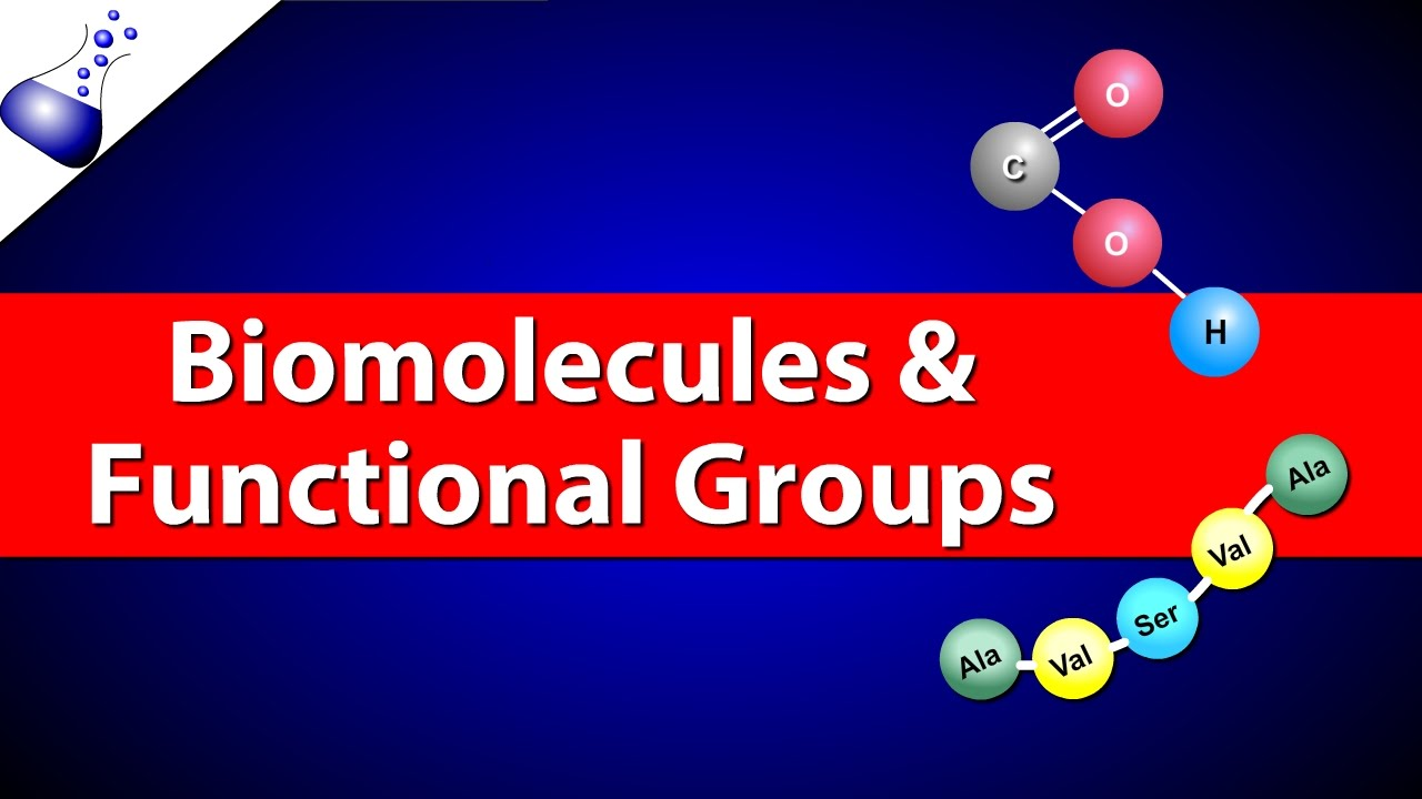 biomolecules and functional groups