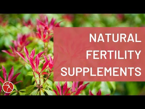 Fertility Supplements That Help You Get Pregnant   7 Considerations