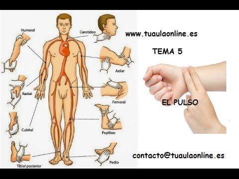 MEDIDA DEL PULSO /// TCAE